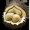 съедобный орех