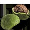лечебные свойства ореха