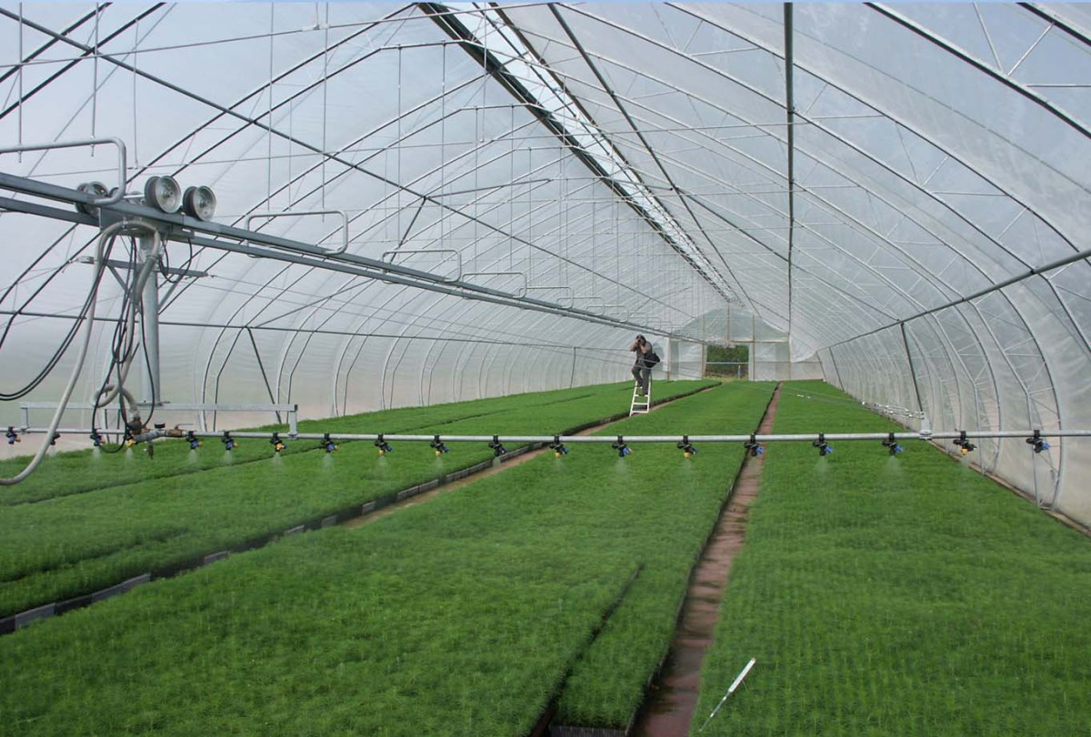 Оптимальные условия для выращивания продукции в контейнерах можно достичь в теплицах.