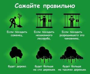 сажайте деревья