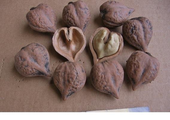 японский фото орех
