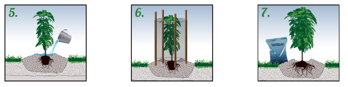 как сажать деревья 2