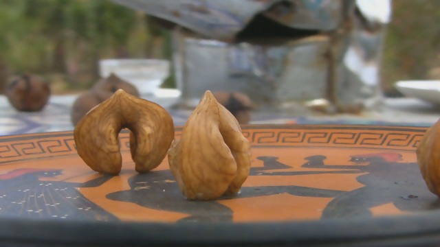 саженцы сердцевидного ореха