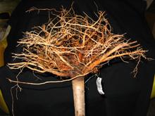 Качественная корневая система