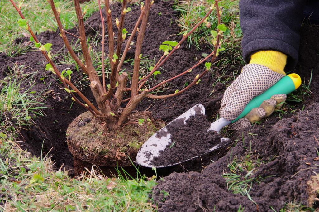 Какие кустарники и деревья можно сажать летом 20