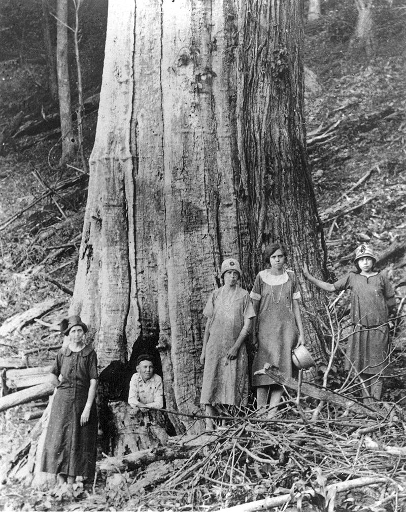 Семья Джеймса и Кэролайн Шелтон позирует у большого мертвого каштана в Национальном парке Грейт-Смоки-Маунтинс примерно в 1920 году.