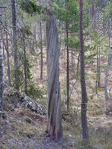 выкрученное дерево, косослой
