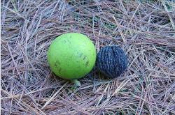 черный орех