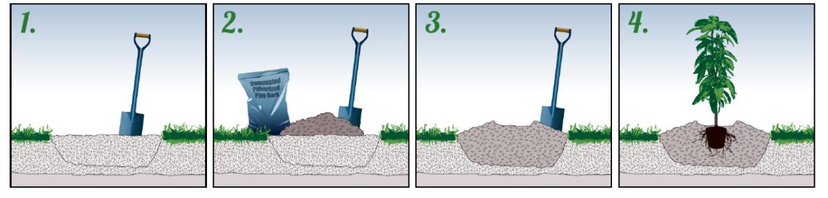 как сажать деревья