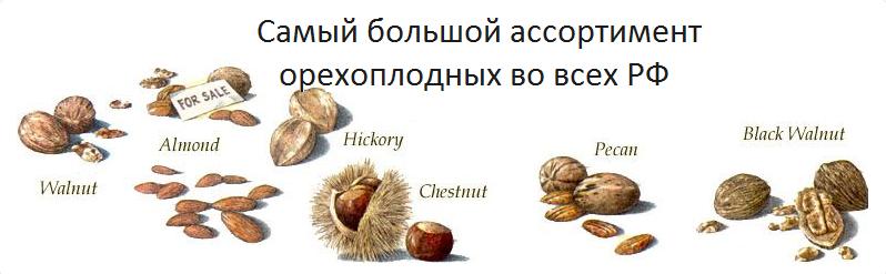 ассортимент орехоплодных саженцев