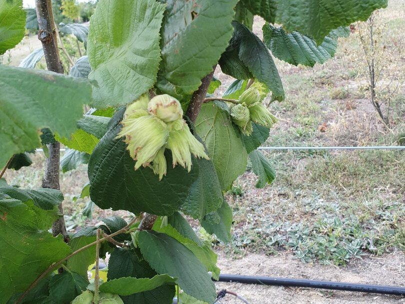 42-19 фото плодов