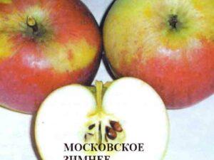 московское зимнее