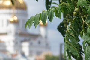 Серый орех на фоне Храма Христа Спасителя